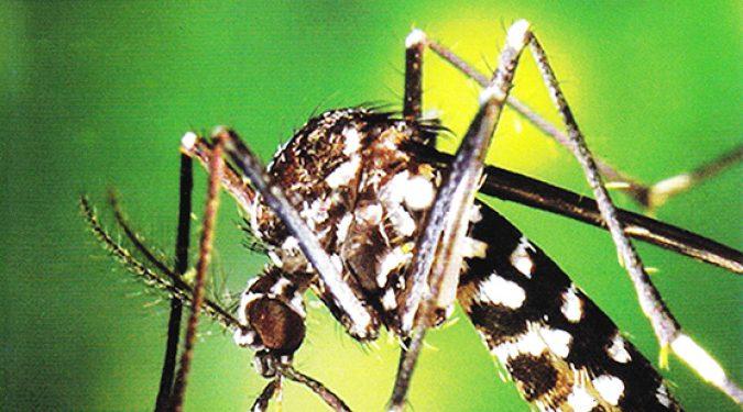 Campaña de prevención para el Mosquito Tigre